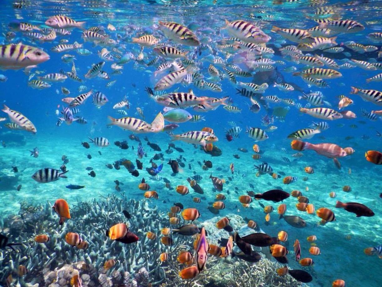 Bali Lembongan Island Tour Package Memory Maker Holiday